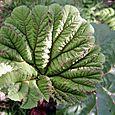 Leafmacro3
