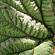 Leafmacro1