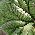 Leafmacro2